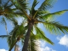 palm-tree-and-blue-sky-1440151-s